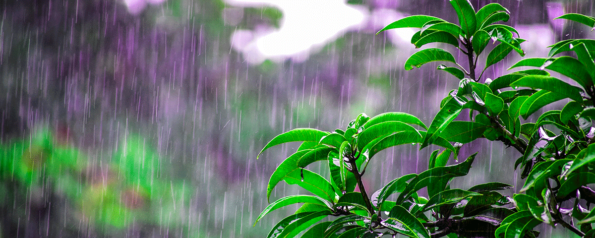 bright-environment-flora-1200x480-72